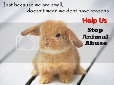 stop animal abuse Pictures, Images and Photos